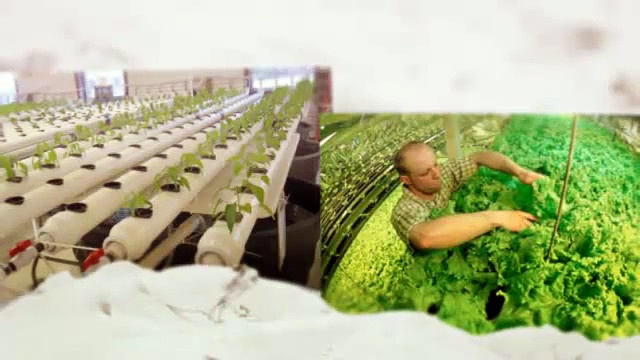 Aquaponics 4 You – A Sustainable Food Source For Your Home Or Business