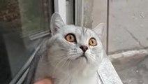 Focused kitty is focused