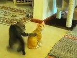 Un chat terrorisé par un faux chat