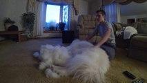 Il a brossé son chien pendant 1h, résultat : un tas de poils ENORME!