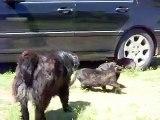 Des chiens stoppent une bagarre de chats