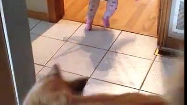 This is Too Cute - Dogs are so smart - Chasing Shadow - kid is teaching him how to jump - Funny - Lovely - AphoenixD