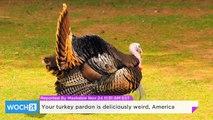 Your Turkey Pardon is Deliciously Weird, America