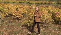"""Catherine Roques, vigneronne : """"Des événements comme Vino Bravo réaniment la flamme de nos métiers"""""""