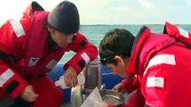 WIKHYDRO - Un indicateur de qualité du milieu marin : le zooplancton