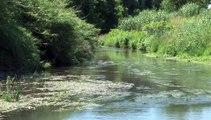 WIKHYDRO - Lône de Pont-Saint-Esprit (Ecologie)