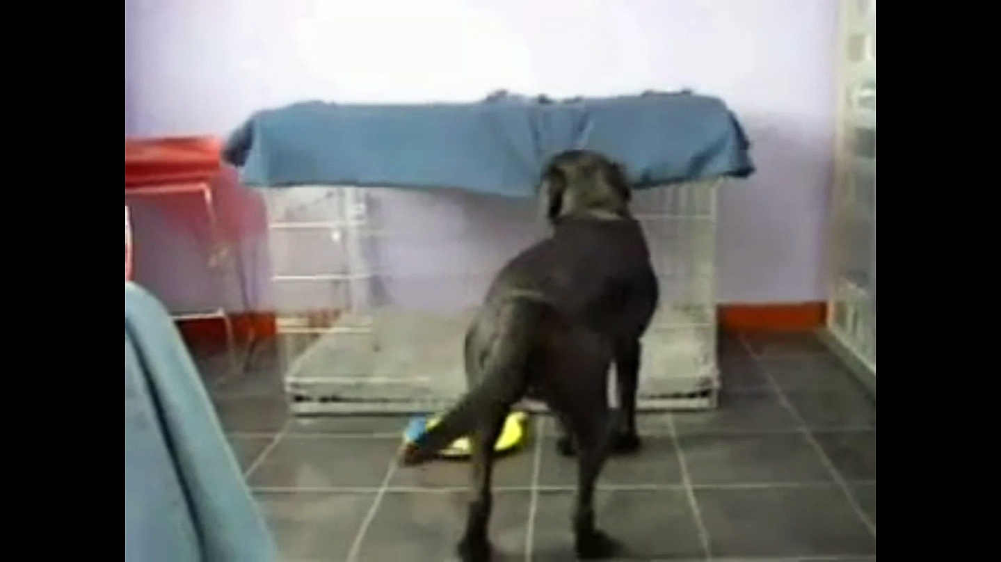 Epic Dog Makes His Own Bed