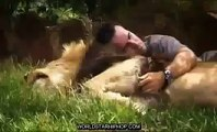 Documentary Hungry Lions National Geographic Animals, Nat Geo Wild, Discovery Channel