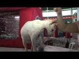 Expo Gatos 2012 reúne os mais belos felinos do Brasil