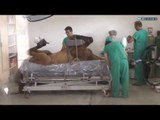 Animais abandonados em Indaiatuba ganham hospital veterinário