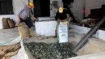 Balıkesir Burhaniye Taş Baskı Zeytinyağına İlgi