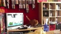 Ces chats qui ne savent pas sauter comme des vrais chats