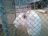 White Lions | Save the White Lions
