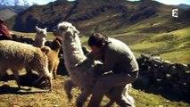 """Arthur se fait cracher dessus par un lama dans """"Rendez-vous en terre inconnue"""""""