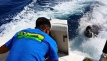 Sea lion climbs on boat to get a fish