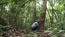Amazon condoms fight AIDS, help Brazil conservation