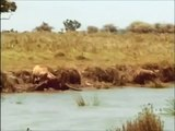 Intelligent Animals; HYENAS Eating, Mating, Laughing Full Nature Wildlife Documentary