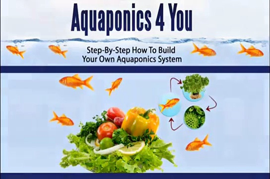 Aquaponics 4 Idiots – The Idiot Way of Building an Aquaponic System