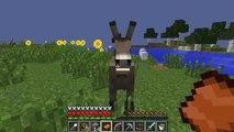 um burro e um xp!