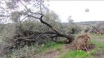 Soma'da Kurulması Planlanan Termik Santral