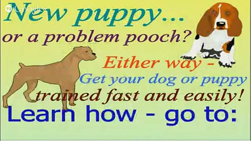 Online Dog or Puppy Training for Your Bichon Frise