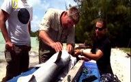 فيلم سمك القرش المفترس مترجم