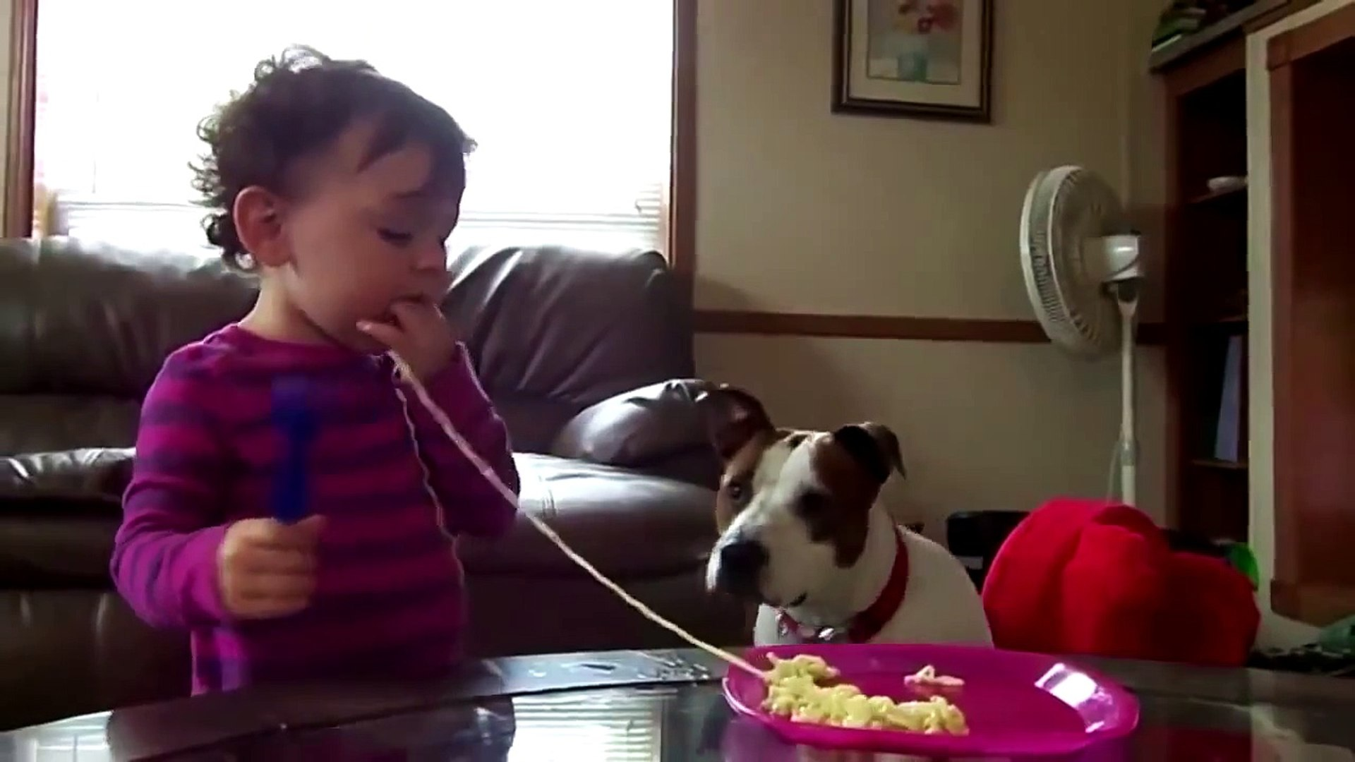 Funny pictures of cats and dogs animals | Cute Babies Love Funny Dogs Compilation 2014