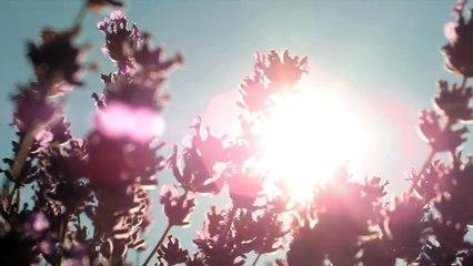 L'OCCITANE setzt sich für den Lavendel ein
