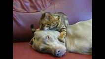 Un chat masse la tête d'un chien