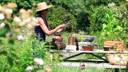 Aromacología, Aromaterapia, el poder de las plantas