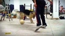 nutmeg/tunnel to dog | learn soccer | soccer moves | football tutorials | football skill | futsal