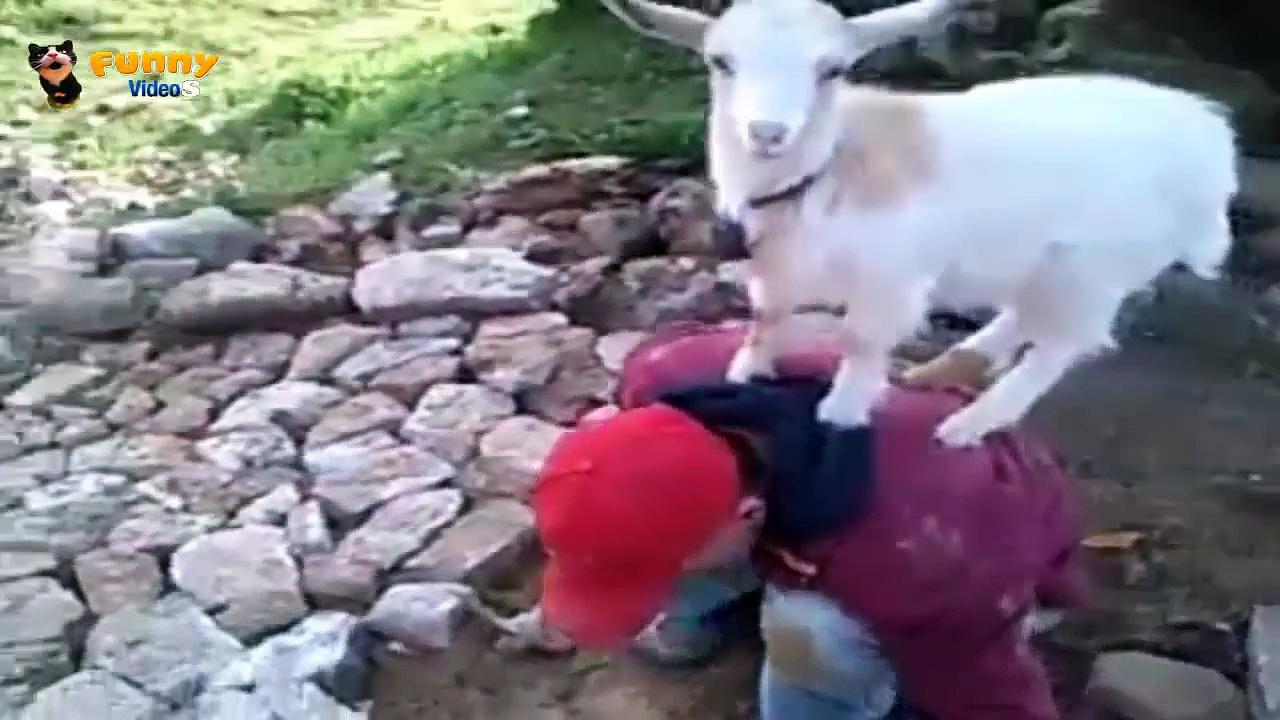 Crazy goats – 2014 ✔