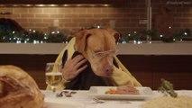 13 chiens et 1 chats à table mangent comme des humains leur repas de Noël