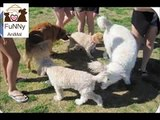 Top 10 Funny Animals  Funny Animal Pictures  Dogs Funny Clips  Comedy Fails and Bloopers