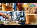 Buy Bulk Wholesale USA Wheat, USA Wheat Import, Buy Bulk USA Wheat, Bulk USA Wheat, Bulk USA Wheat, USA Wheat