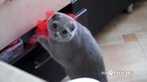 Pris en flagrant délit de bêtise, ce chat va faire une tête incroyable pour se faire pardonner