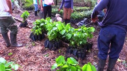 Reforestation en Equateur avec l'association Ishpingo