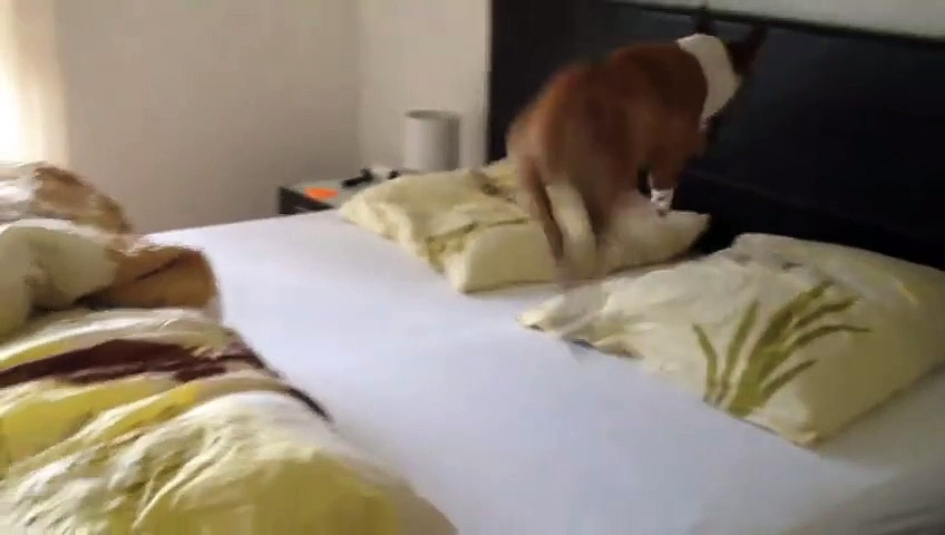 Dog Got Excited On New Bed!