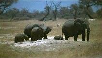 L'incroyable périple d'un éléphanteau à travers l'Afrique australe