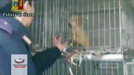 30 cuccioli importati illegalmente dall'Ungheria e diretti al mercato romano