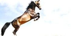 Mekke'de Uçan Atın Sırrı Çözüldü