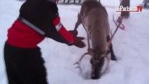 Voyage extraordinaire en Laponie pour 13 enfants malades