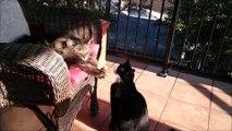 Un chat bien vicieux va faire flipper un autre chat qui dort tranquillement!