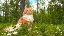 [ Funny Cats ] 岩合光昭の世界ネコ歩きmini「よちよち子ネコ」「ネコだって泳げる」