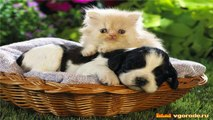Christmas Pets Cats and Dogs Holidays Funny Cute Animals Cute Dogs Club
