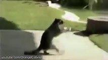 Thief Animals