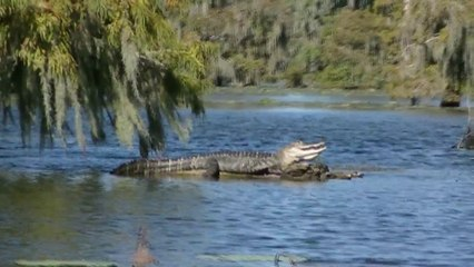 Louisiana-Bahamas-Florida 2014, Jour 3: Breaux Bridge-New Orleans