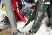 Delfino muore spiaggiato nel palermitano