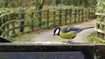Coal Tit, Blue Tit, Nuthatch, Robin and Great Tit - Little Birds Chirping on The Gate