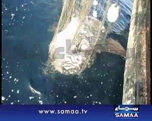 Rare Ocean Sunfish discovered for the first time in Pakistan's waters